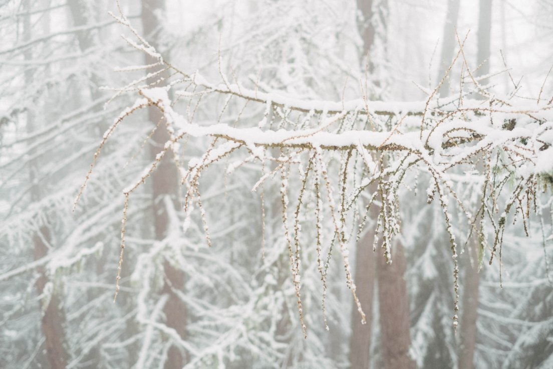 Detail of a tree branch in the whiteness of a snowy landscape