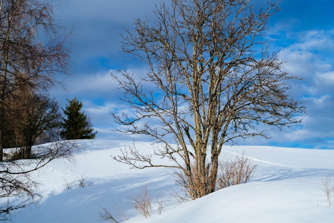 Snowy landscape on a bright blue day