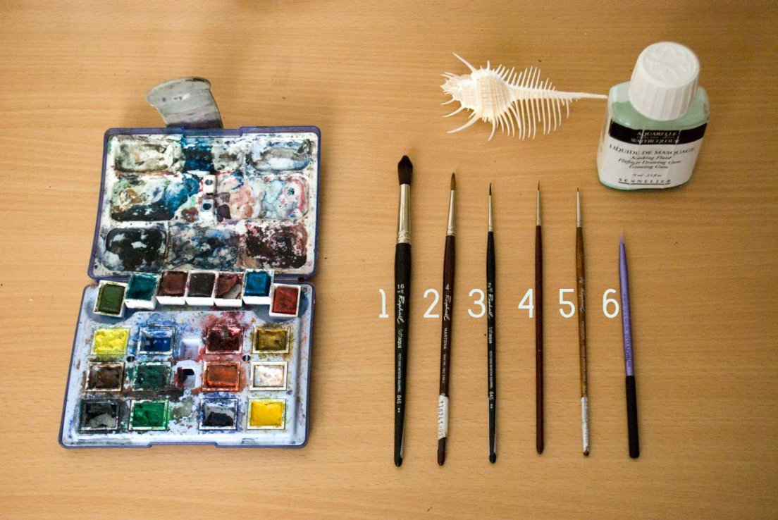 An artist desk with a watercolour palette, an array of paint brushes, masking fluid and a murex shell.