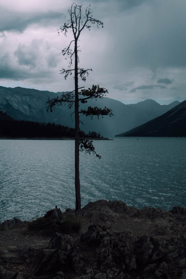 A tree at the forefront of a lake surrounded by mountains