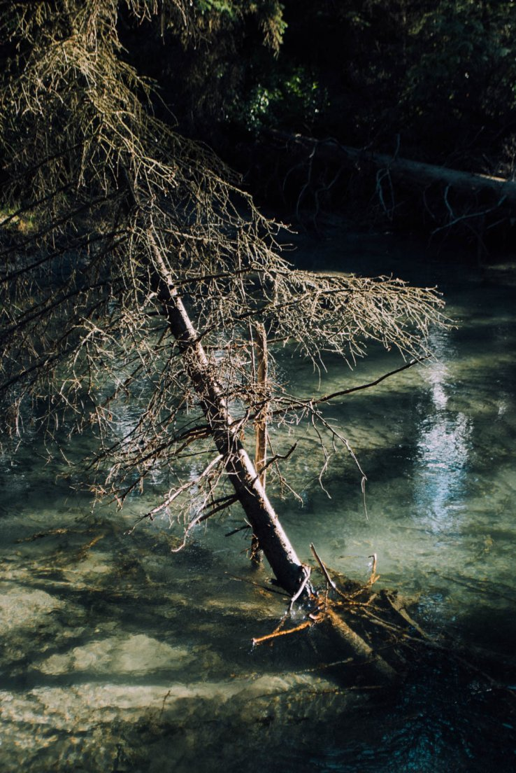 Fallen tree in the river by a sunny morning