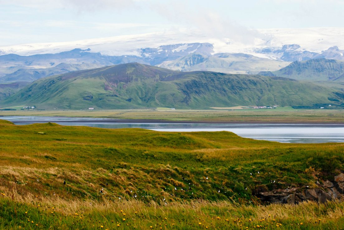 Meadow, puffins, and Mýrdalsjökull in the distance