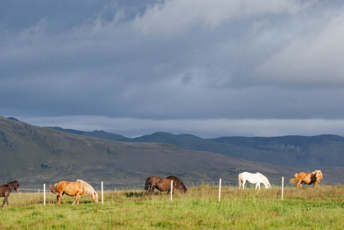 Horses eating grass at the closure of a sunny day with mountains in the background