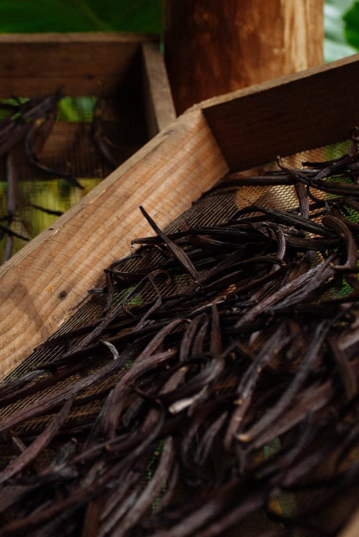Vanilla beans drying on a crate