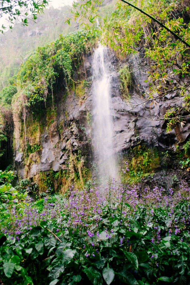 A waterfall and a purple flower bed on a rainy day