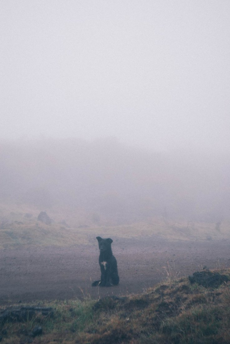 Dog sitting on a road in a great fog at the Piton de la Fournaise