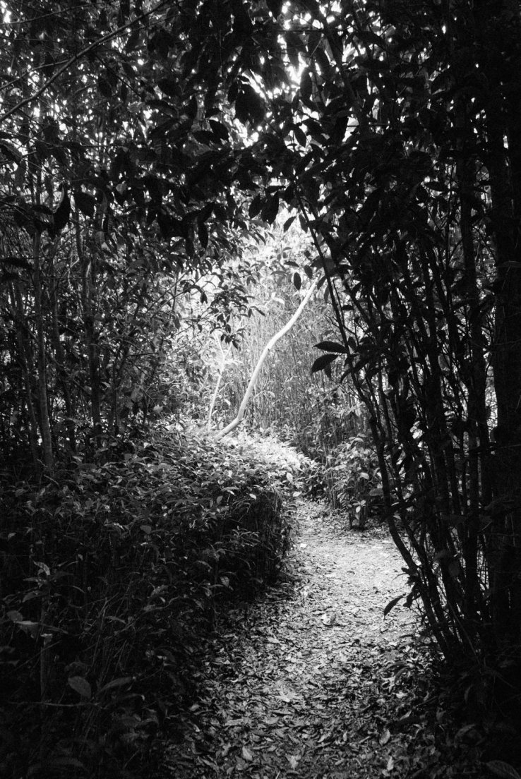 Black and white photograph of one of the paths from the tea tree maze
