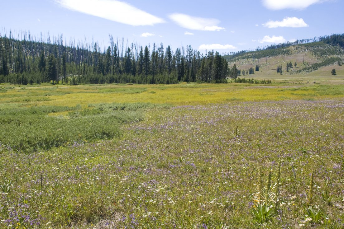 Sunny meadow with purple flowers