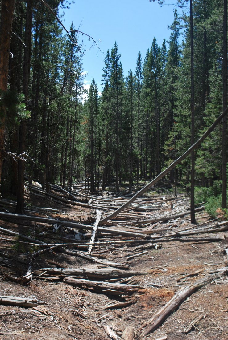 Trail with fallen tree trunks all over