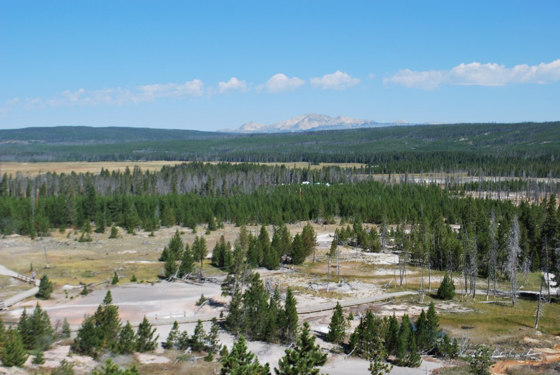 Overview of a forest in Yellowstone