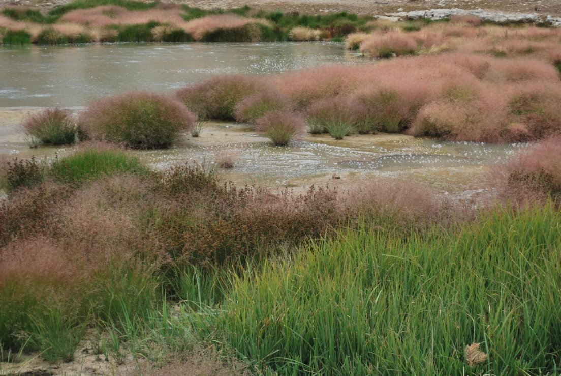 Purple heath and bubbling mud pots on a sunny day