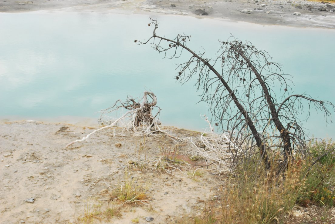 Small dead branchs in front of a turquoise milky pool