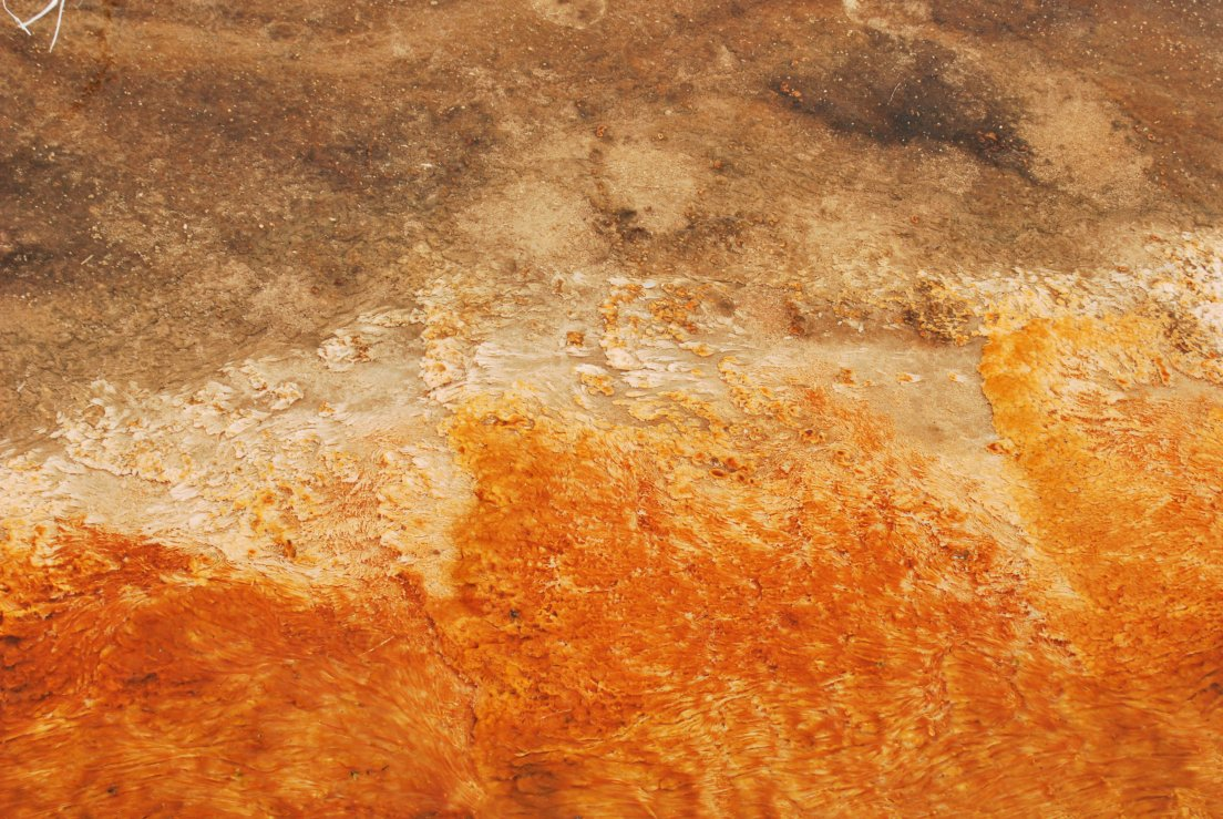 Striking orange texture detail