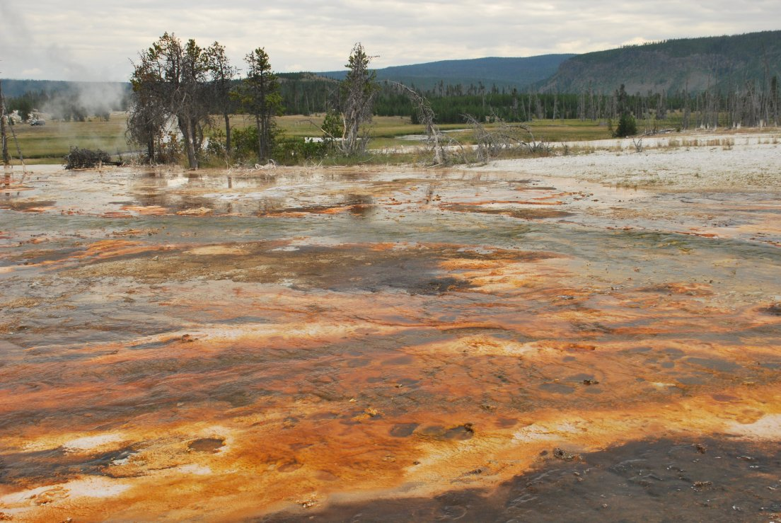 Landscape with striking orange texture on the ground