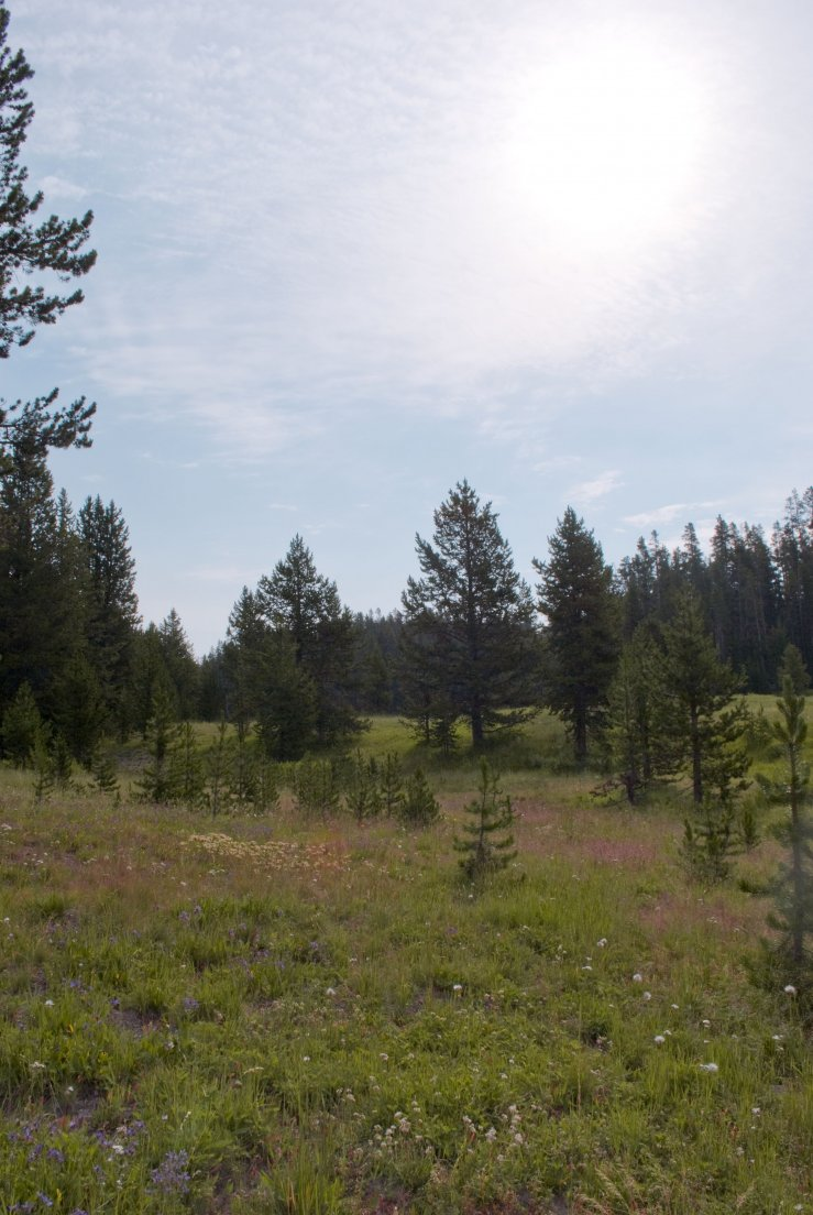 Meadow on the trail to Shoshone Lake