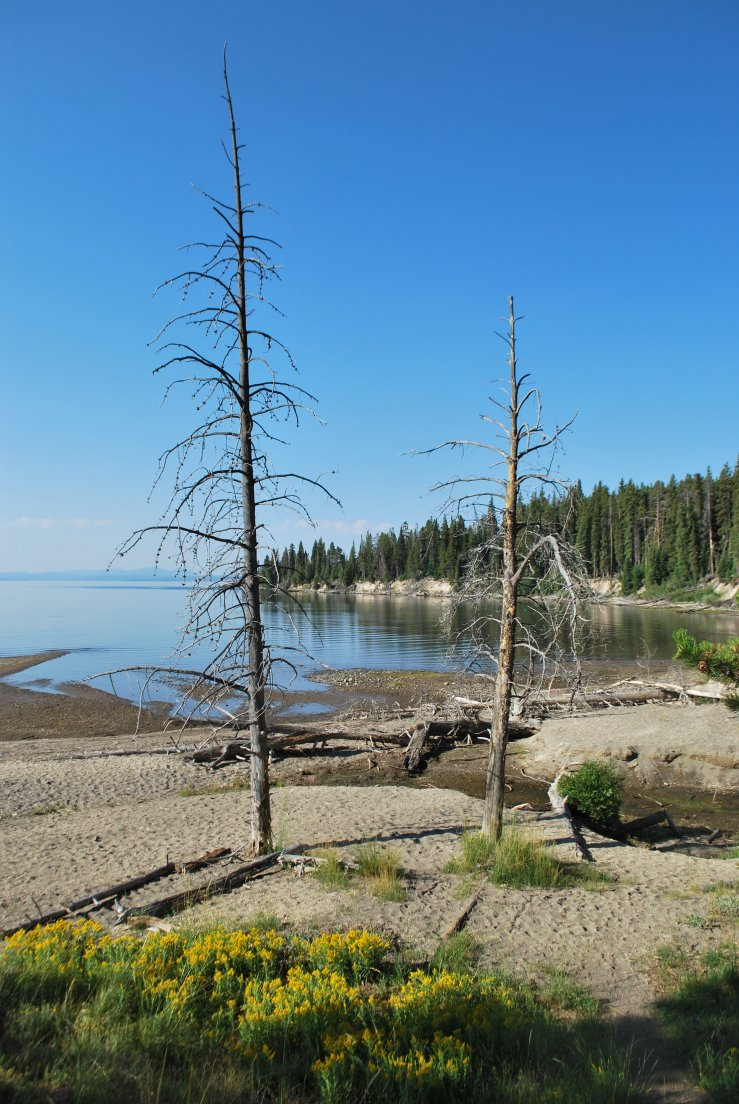 Yellowstone Lake shore in the early morning