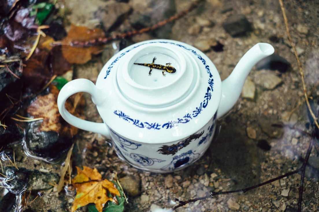 Juvenile salamander resting in the upside-down lid of a blue teapot from Enchanteresse, a collection of hand-painted porcelains by messalyn, in the middle of a forest pond