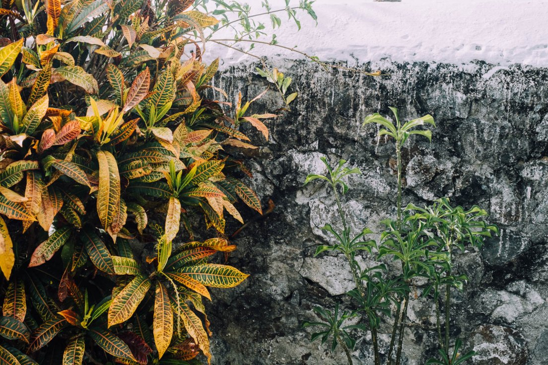 Tropical bush and an old wall with white paint drippings, Reunion Island