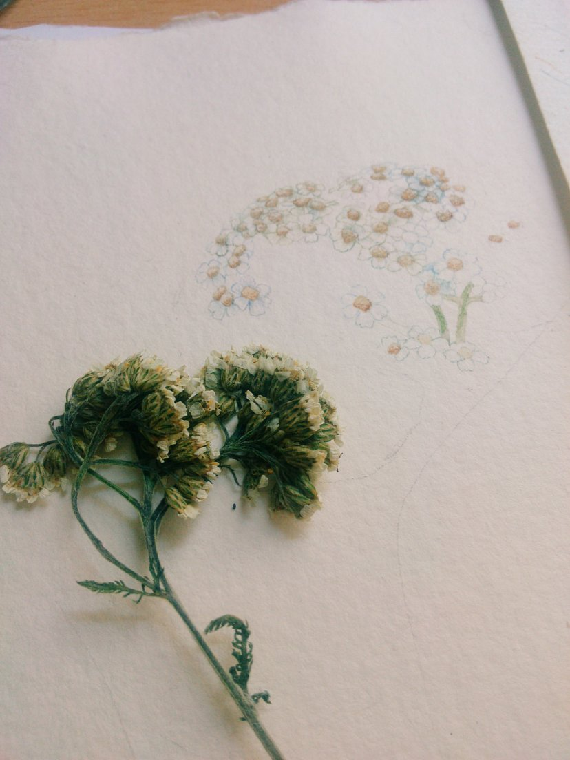 Work in progress 2 of Herbier en Balade